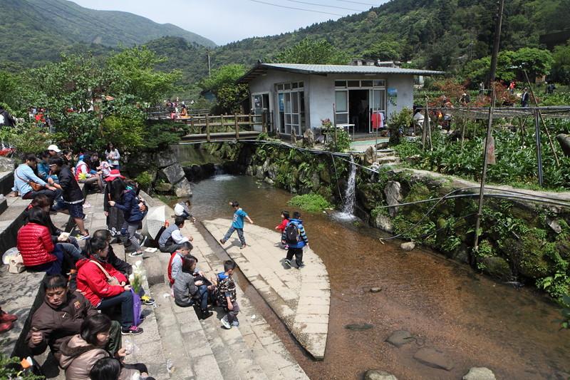 IMG_0310台湾陽明山_海芋祭と七星山登山