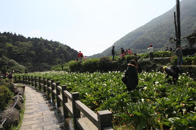 IMG_0348台湾陽明山_海芋祭と七星山登山