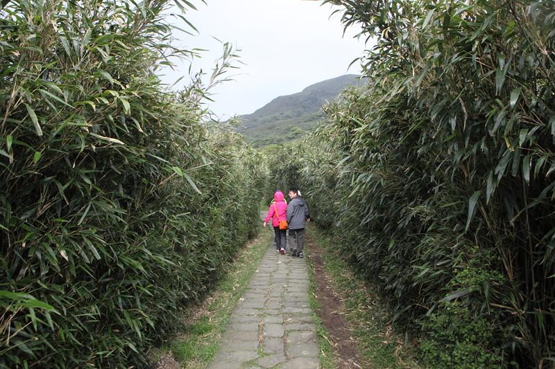 IMG_0413台湾陽明山_海芋祭と七星山登山
