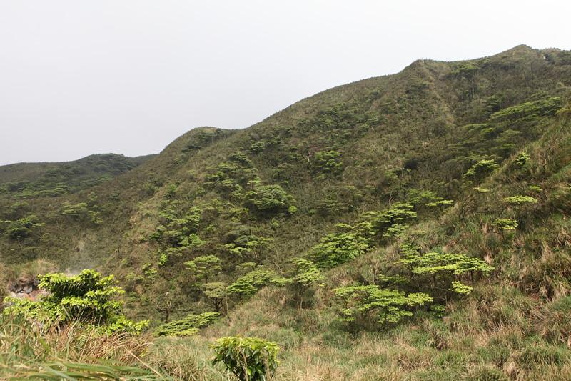 IMG_0431台湾陽明山_海芋祭と七星山登山