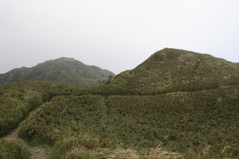 IMG_0446台湾陽明山_海芋祭と七星山登山