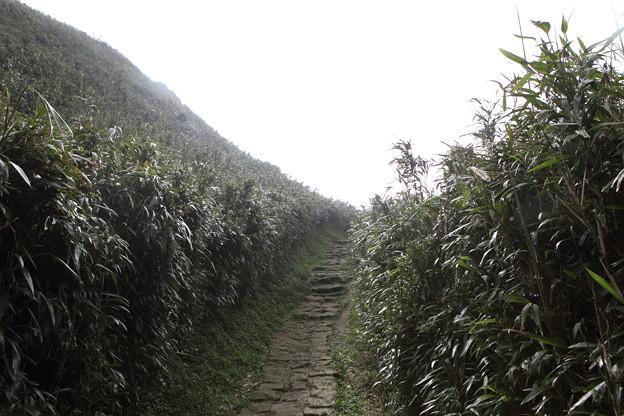 Photos: IMG_0476台湾陽明山_海芋祭と七星山登山