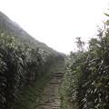 IMG_0476台湾陽明山_海芋祭と七星山登山