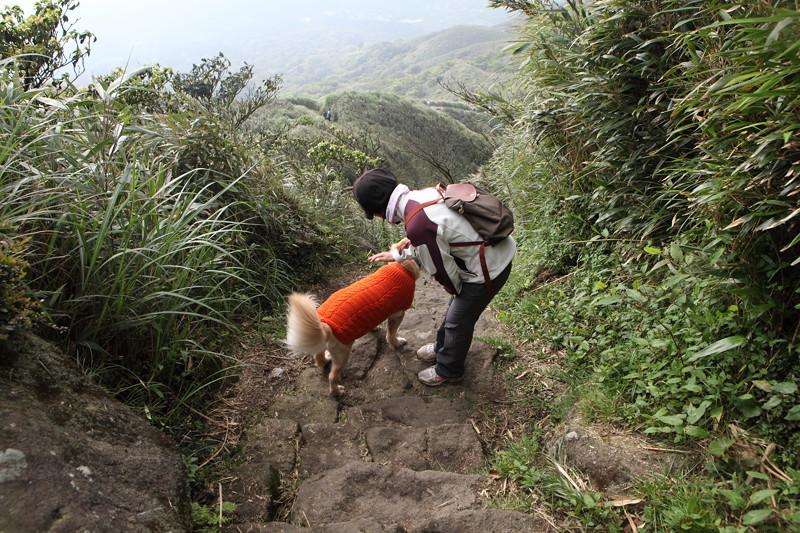 IMG_0483台湾陽明山_海芋祭と七星山登山