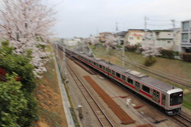 Photos: 桜と