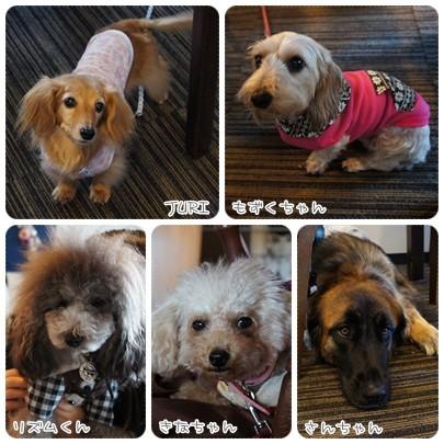 20121115 犬服講座
