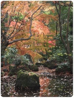 20121124 紅葉狩り1