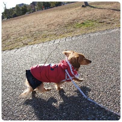 20121231 今年最後のお散歩1