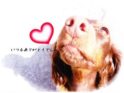 20130112 きなちゃん☆