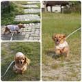 写真: 20130525 お散歩