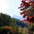 Photos: 乗鞍高原 紅葉(2)