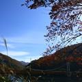 紅葉と赤い橋  箱ヶ瀬橋(夢のかけはし)