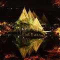 兼六園 唐崎の松 紅葉とライトアップ(1)