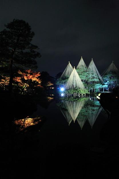 兼六園 唐崎の松  雪吊りとライトアップ(1)