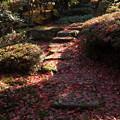 Photos: 紅葉の石段
