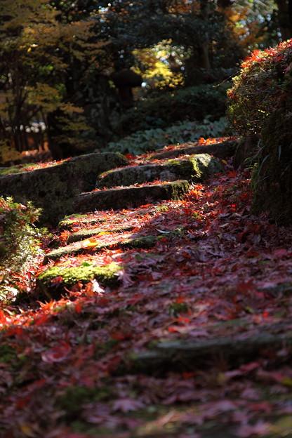 Photos: 石段のモミジ絨毯