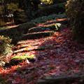 石段のモミジ絨毯