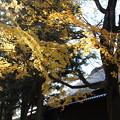 Photos: お寺の屋根とモミジ