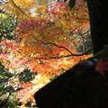 金沢 玉姫の寺 天徳院 境内のモミジ