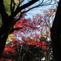Photos: 金沢 玉姫の寺 天徳院 モミジ