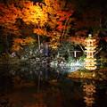 兼六園 ライトアップ 瓢池 翠滝 海石塔