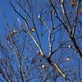 青空と雀の木