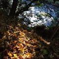 落ち葉と渓流