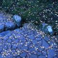 石畳とモミジの落ち葉  苔