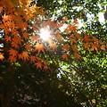 モミジ&太陽