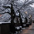 夕暮れの主計町茶屋街  桜並木に雪の花?