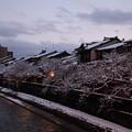 夕暮れの主計町  桜並木に雪の花?