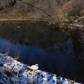 冬の白鳥池