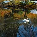 青空と白鳥池