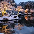 兼六園 霞ヶ池 雪の花
