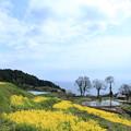 菜の花と棚田&日本海?