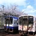 桜と電車 (2)