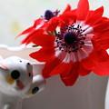 アネモネが開花(1)