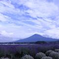 夕暮れの富士山とラベンダー