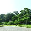 写真: 夏の兼六園  唐崎松