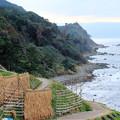 千米田 日本海と稲のハザ掛け