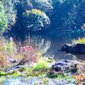秋の御射鹿池(4)