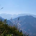 白山とススキ  白山スーパー林道