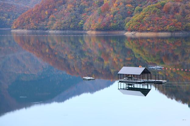 Photos: 紅葉の九頭竜湖?