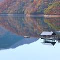 紅葉の九頭竜湖?