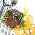 ビル街 花とイチョウの黄葉