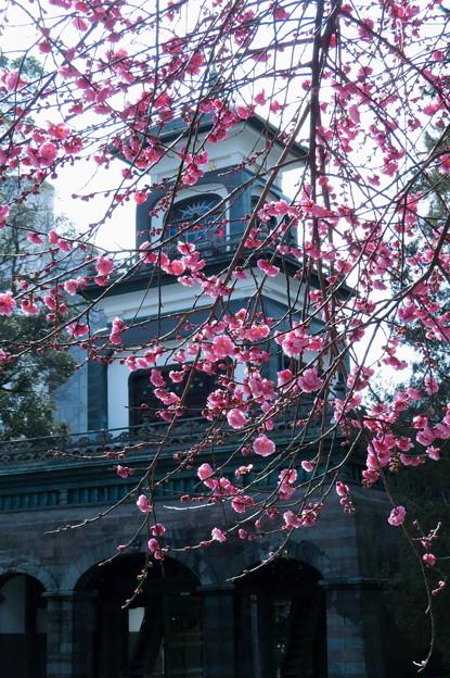 尾山神社 紅梅と神門