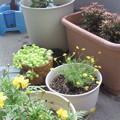 Photos: 夕暮れの早い秋は、黄色い花...
