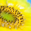写真: Float flowers of summer.