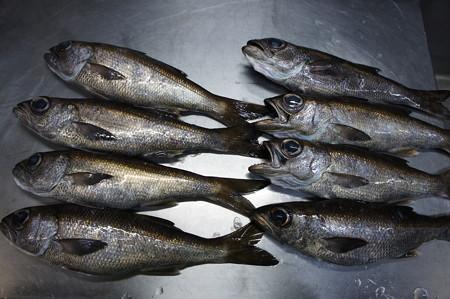 並ぶ高級魚