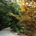 Photos: 上賀茂神社2
